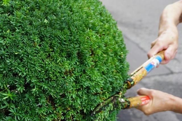 伐根・草刈り・剪定の依頼はさいたま市の便利屋ecoグリーンへ