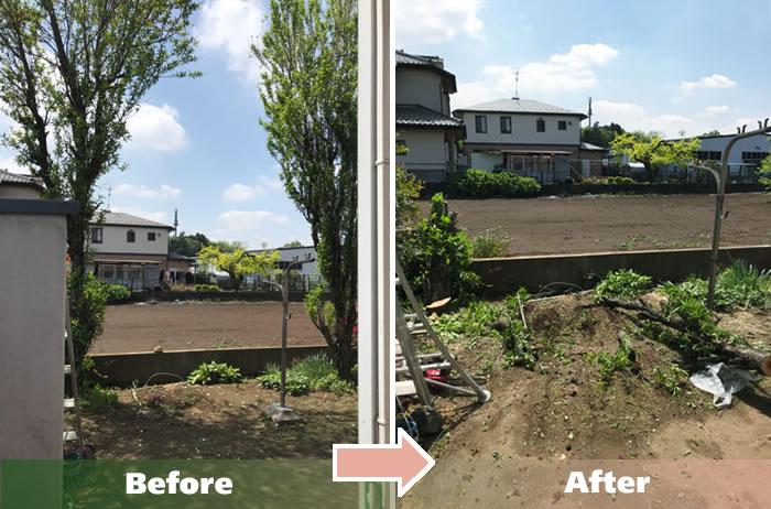 越谷市M.Aさん宅大木の伐採作業2