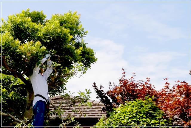 庭のお手入れは千葉県柏市の便利屋エコグリーンへ