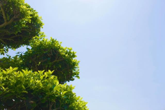 お庭の定期メンテナンスコースの依頼は千葉県野田市の便利屋エコグリーンへ